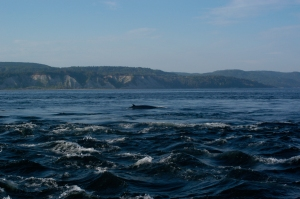 Route 138 from Tadoussac to Natashquan is known as the Whale Route and these giants can be seen from observation points along the shore.